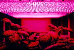 Нажмите на изображение для увеличения.  Название:800px-LED_panel_and_plants.jpg Просмотров:12 Размер:125.0 Кб ID:4716